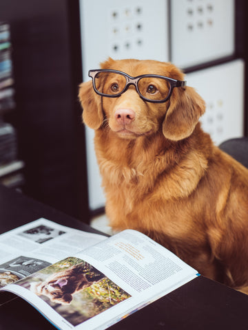Adorable dog wearing glasses with open magazine in front of them.
