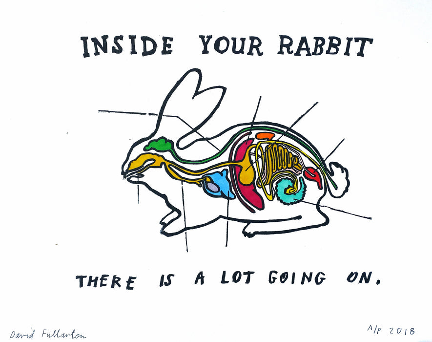 Inside your Rabbit