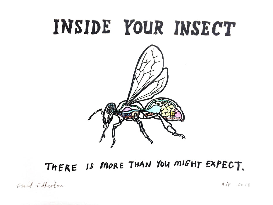 Inside your Insect by David Fullarton