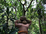 Macadamia from the jungle yoga retreat