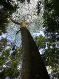 Tree canopy analog jungle sri lanka ecology spiritual nature retreat