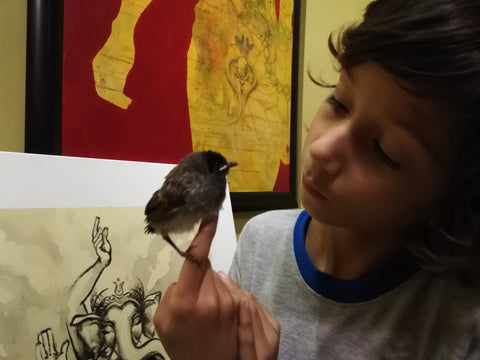 Rescued baby Red Vented Bul Bul