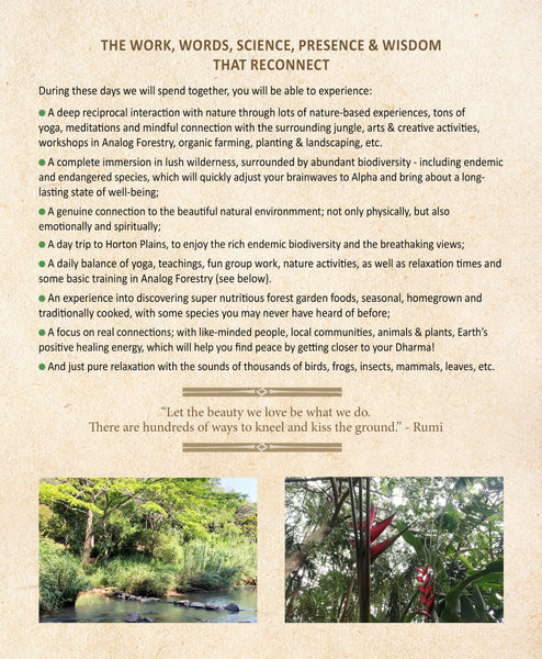 tropical forest yoga retreat
