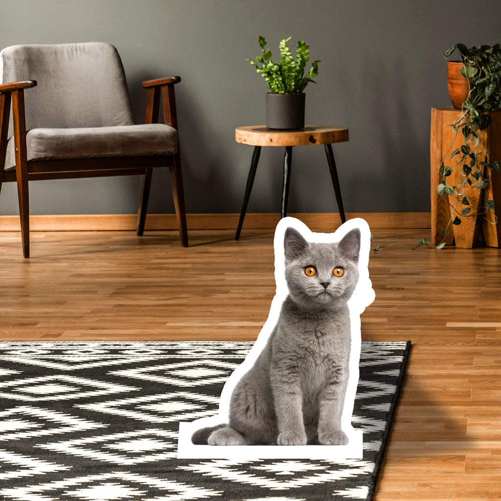 British Shorthair Body Standup - pawprintshq-com