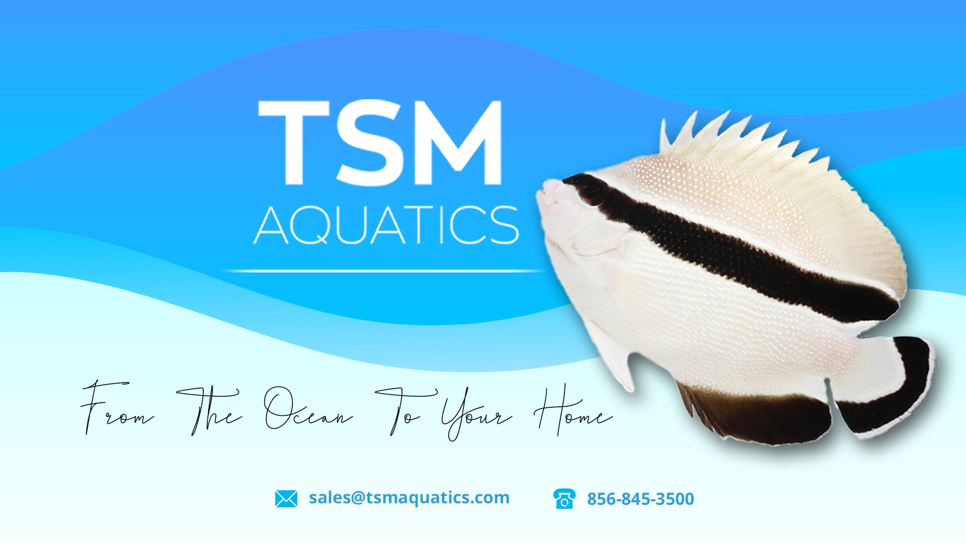 tsmaquatics.com