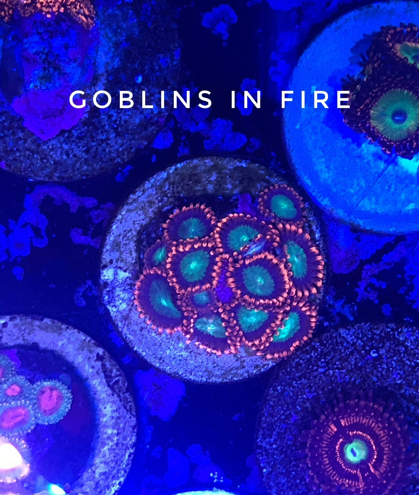 Goblins on Fire