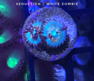 Seduction/CB White Zombie (Designer)