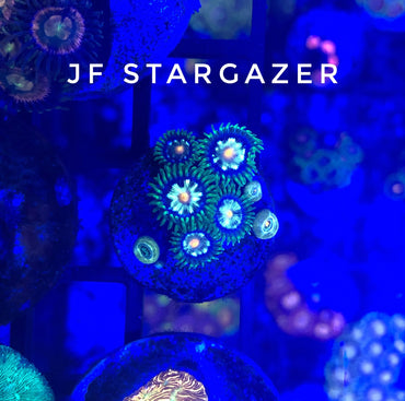 Jason Fox Stargazer