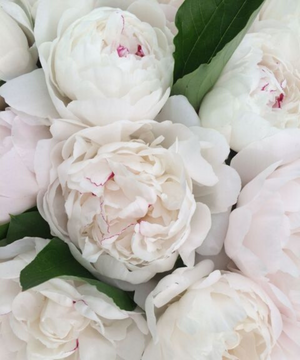 Bunch of Peonies **LIMITED TIME**