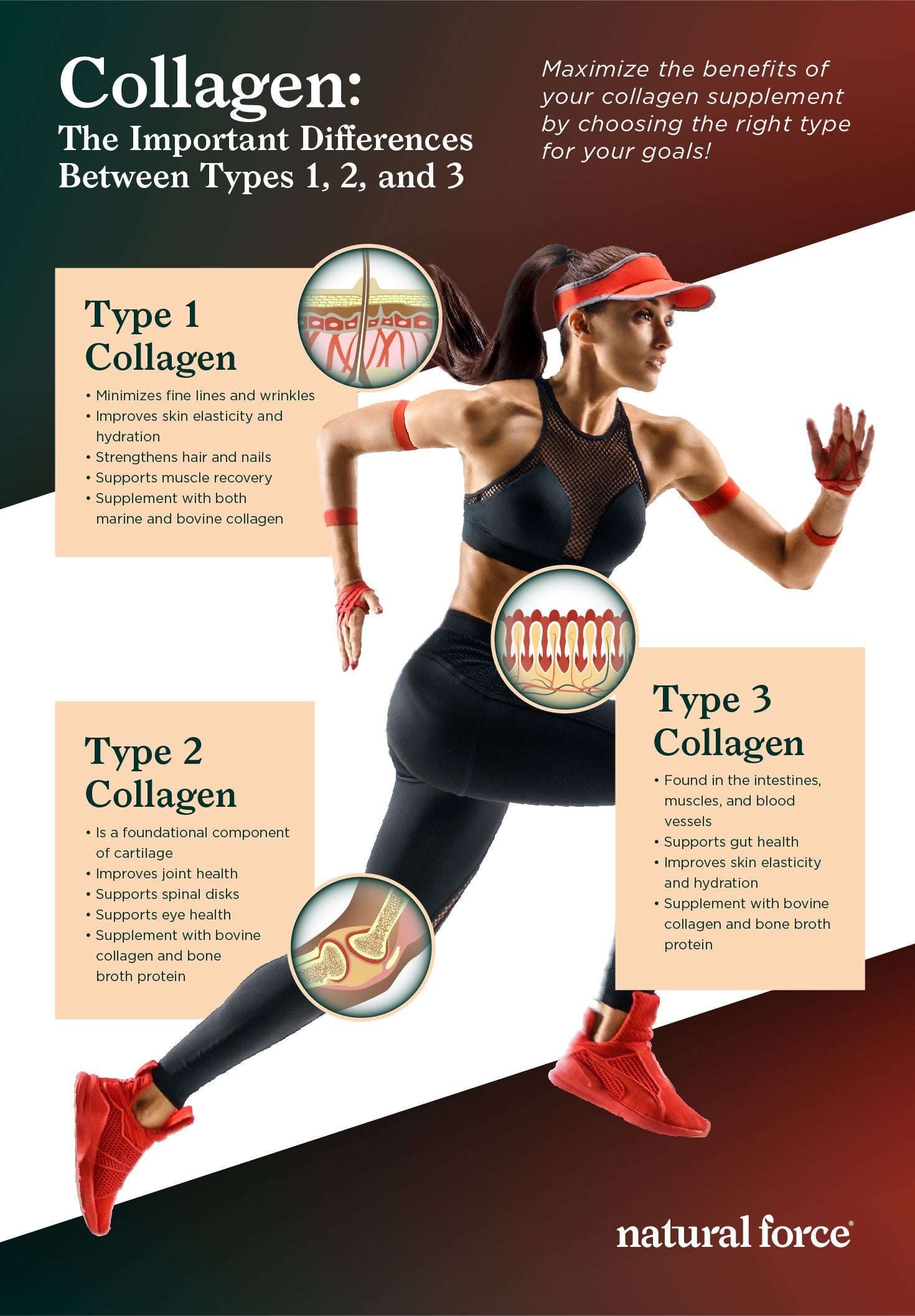 collagen types 1, 2, and 3 infographic
