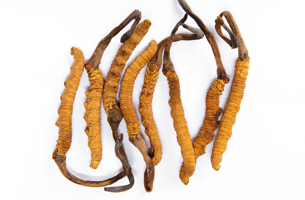 cordyceps for the best cordyceps supplement
