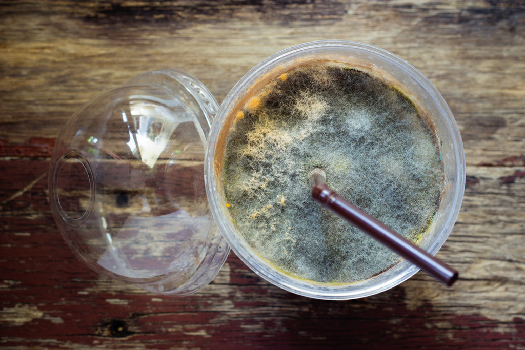 blue mold on the top of a plastic cup of iced coffee
