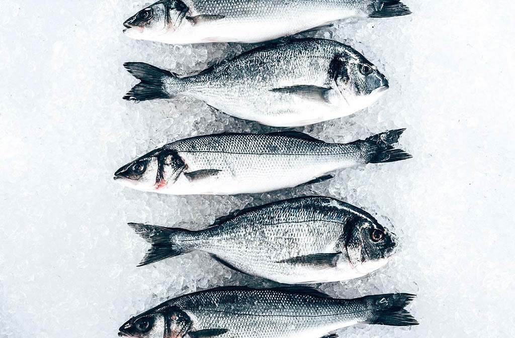 fish lined up on ice