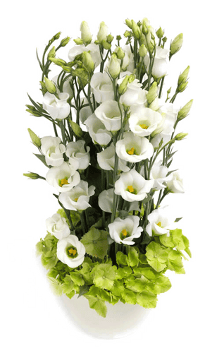 Eustoma tårn