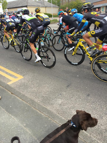 tour de yorkshire France nordvek blog watching race with dog