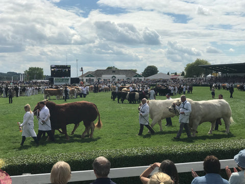 great Yorkshire show Nordvek blog watching cow competition