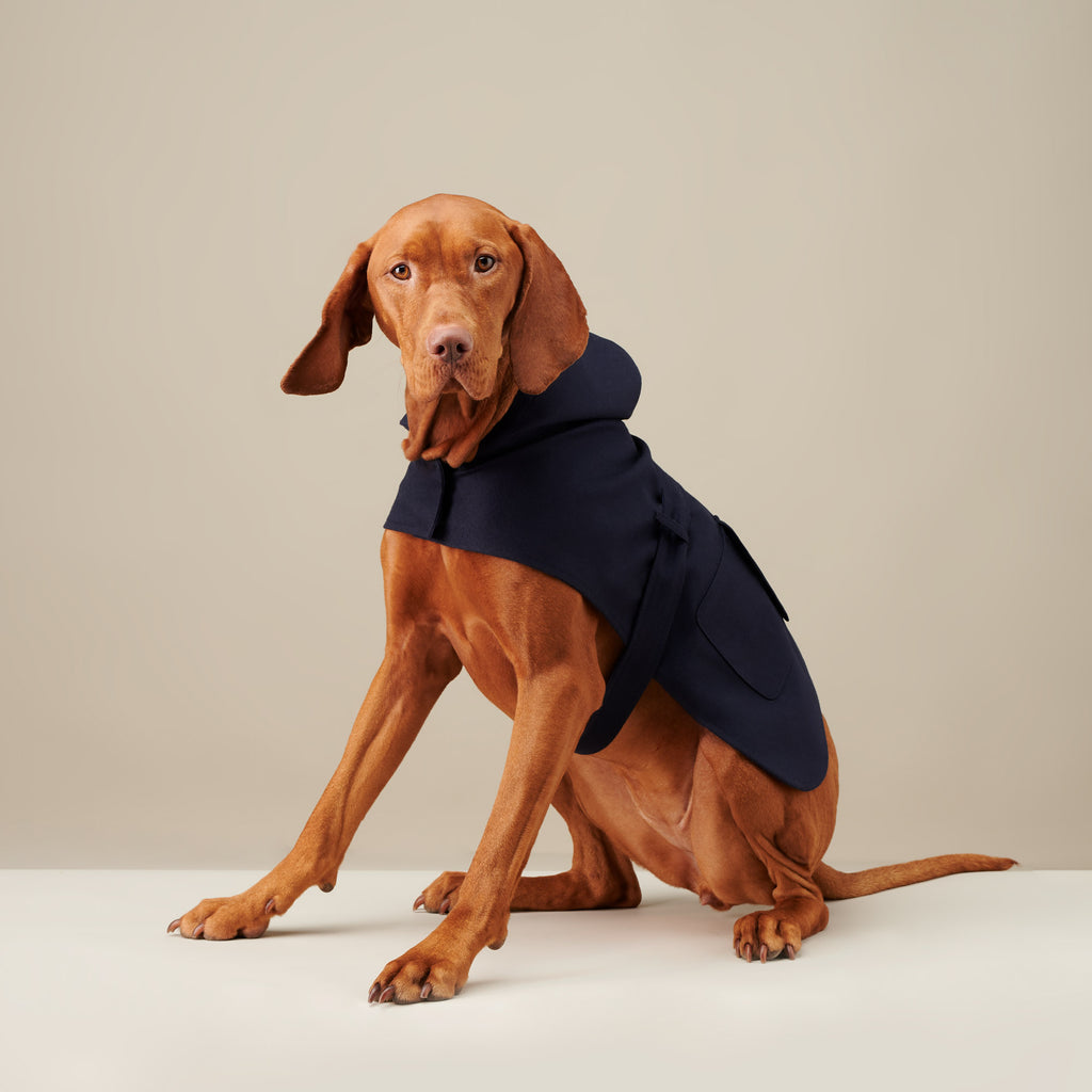 Royal Blue Bandit Raincoat