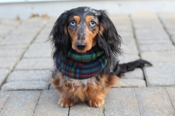 Blue, Green, and Red Plaid Dog Snood Scarf