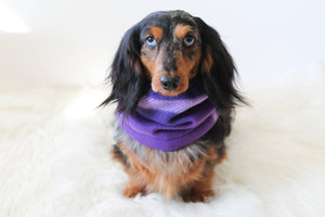 Magenta Dog Snood Scarf
