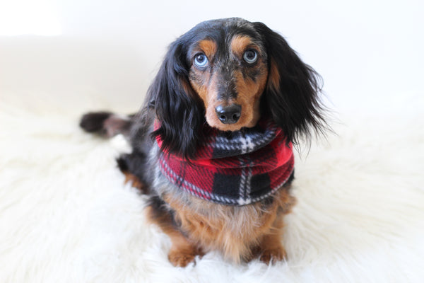 Red Plaid Dog Snood Scarf
