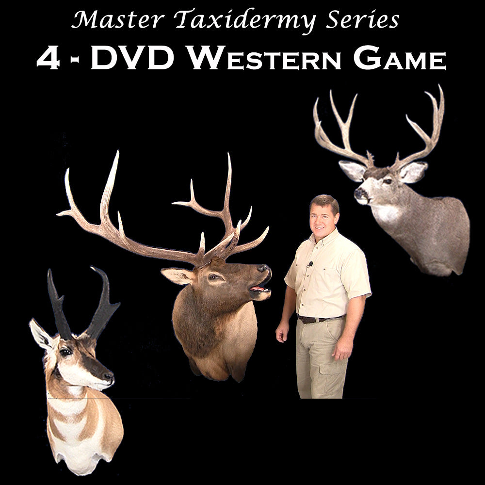 How to Taxidermy school classes