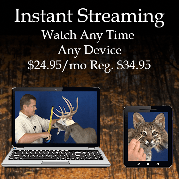 Streaming Online Taxidermy School Classes