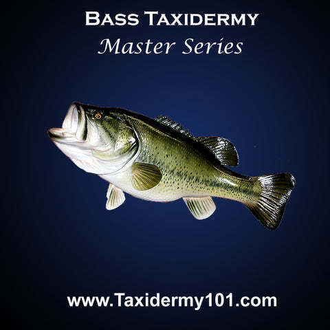 Image of Taxidermy School Course
