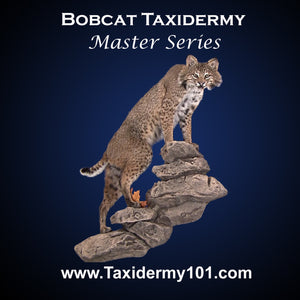 Taxidermy School Course