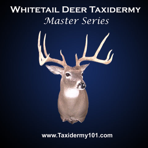 Deer Taxidermy School