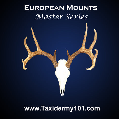 European Mounts