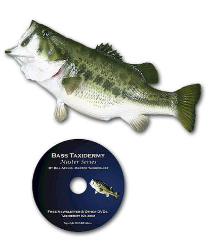 Image of How to bass taxidermy school classes for beginners