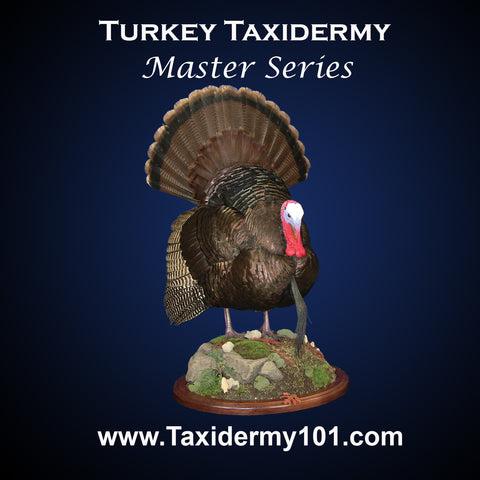 Turkey Taxidermy School