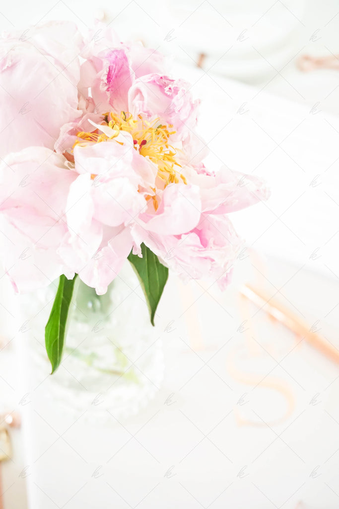 Blush Office Stock Photo Bundle #3