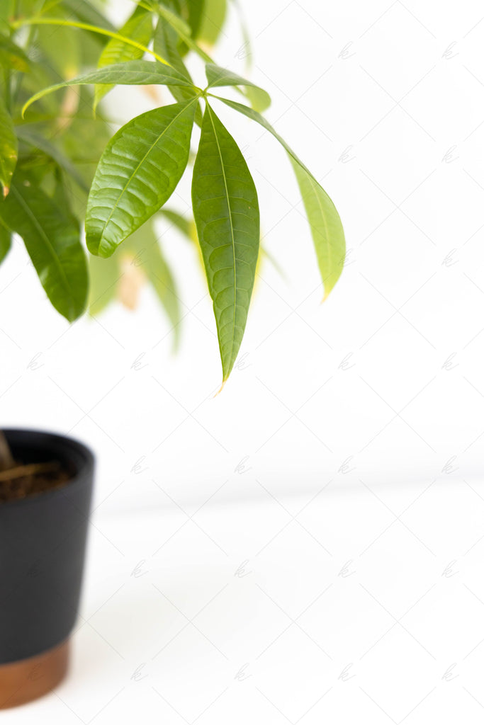 green plant in black pot with copper bottom stock photo