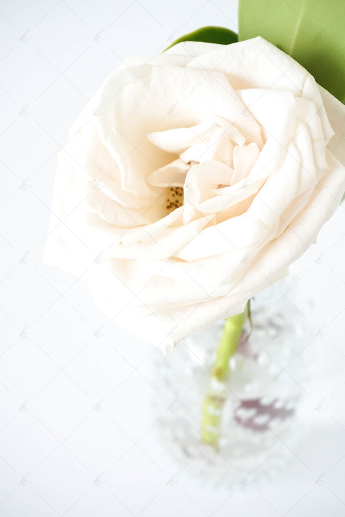 Florals and greenery stock photo for creatives