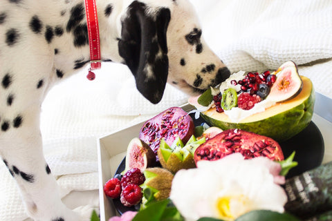 Epsilon Acupuncture food to eat with your dog