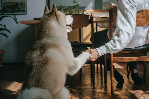 Epsilon Acupuncture dogs helping humans
