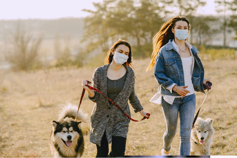 dog walk in face mask epsilon acupuncture