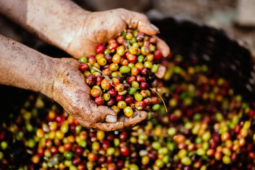#6. How coffee is processed?