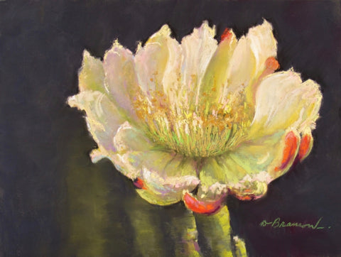 Nocturnal Cactus 1 - Soft Pastel Paintings by artist Donna Hahn Branson