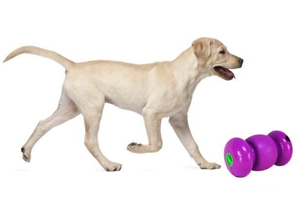 <transcy>Kong Replay - Interactive Toy for Dogs</transcy>