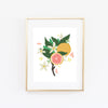 Grapefruit Bloom Art Print - Bloomwolf Studio