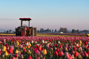 Tractor and Tulips 6075 - Kevin Hartman