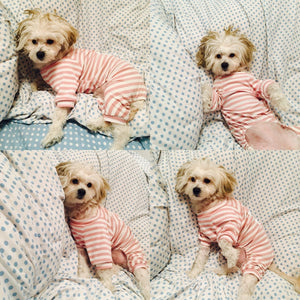 Pet Sleep Suit for Small Dogs and cats - unique innovation pro
