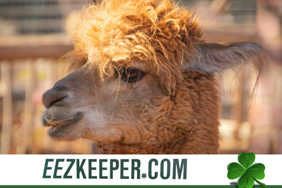 Best feeders for Alpacas : automatically feeding pellets, cubes, grain, supplements and/or any hay products