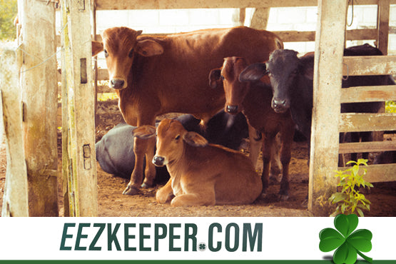 Automatic Cow Feeders : Automatically feeding pellets, cubes, grain, supplements and/or any hay products