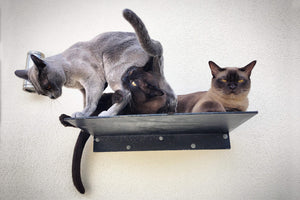 SKYWALKS CAT CLIMBING SYSTEM