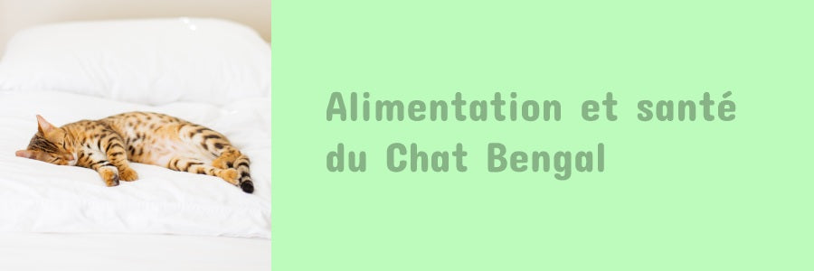 alimentation du chat bengal