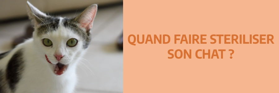 Quand faire stériliser son chat ?