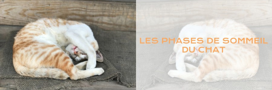 phase de sommeil chat